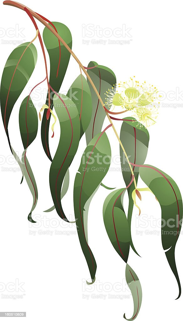 Eucalyptus branch royalty-free eucalyptus branch stock vector art & more images of aromatherapy