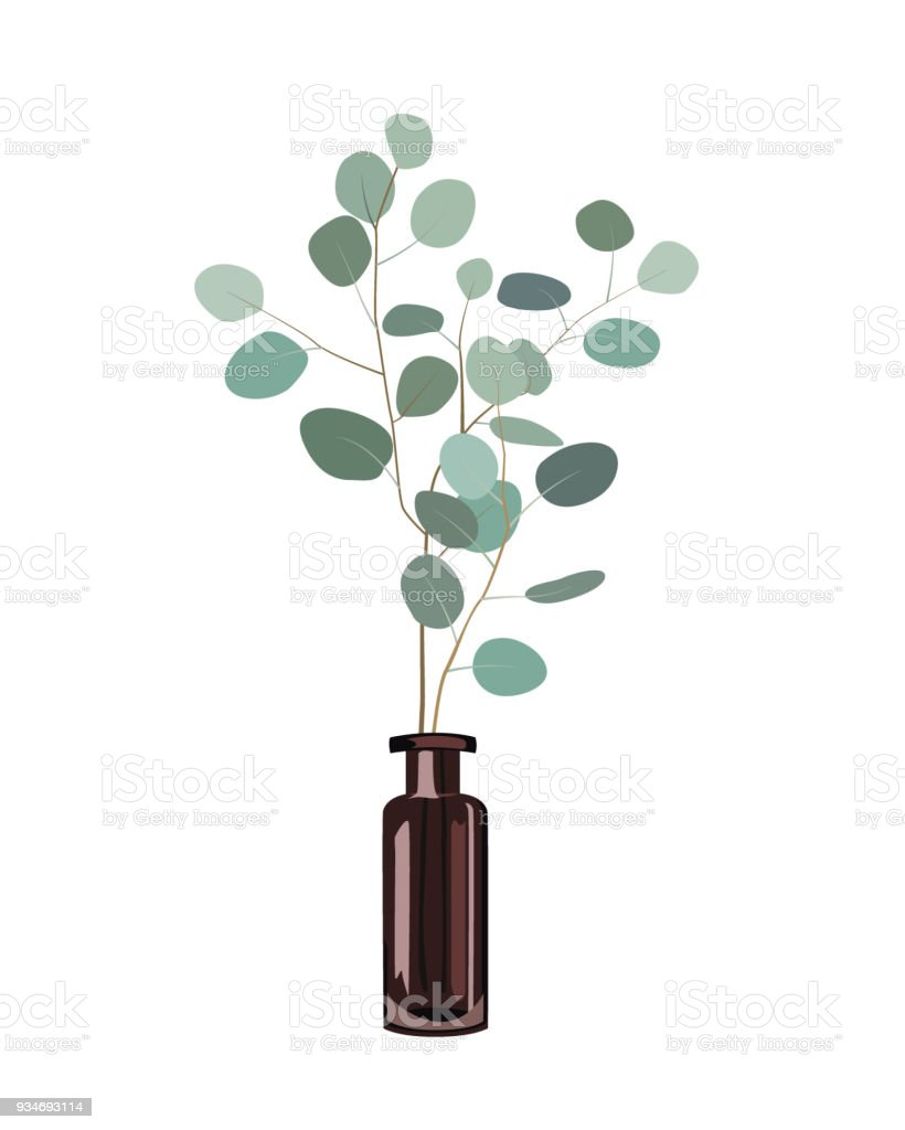branches deucalyptus dans un vase bouteille foncé sur fond blanc