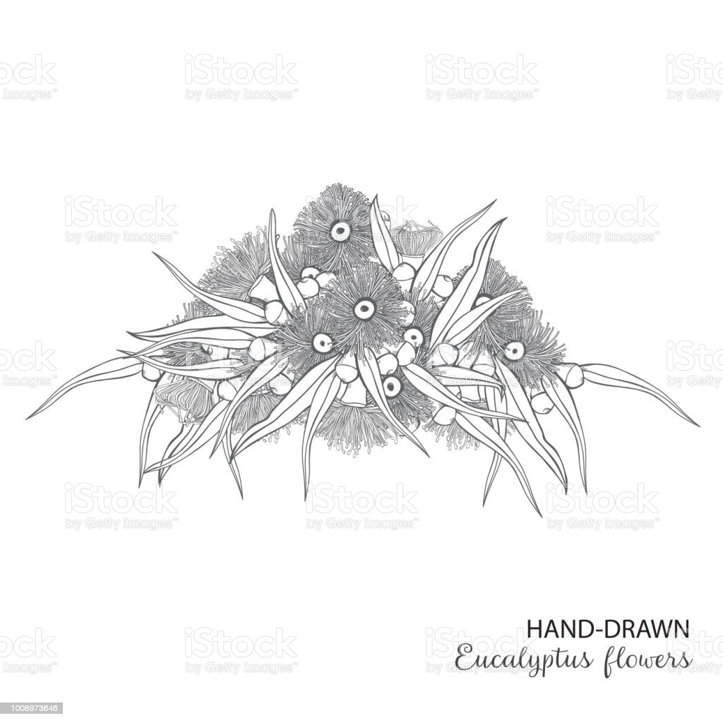 Eucalyptus Hand drawn flowering Wreath vector art illustration