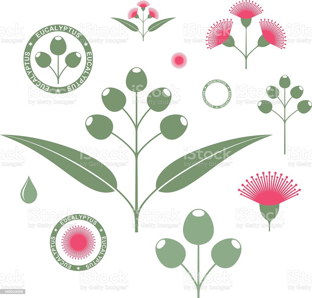 Eucalyptus. Set vector art illustration