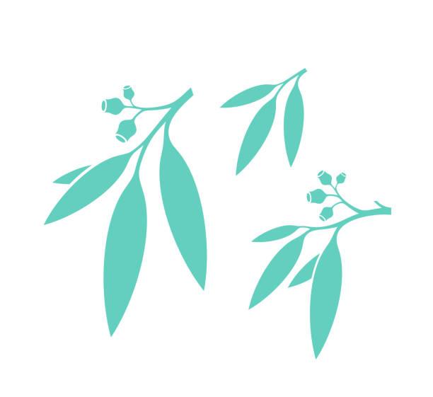 Eucalyptus tree. Isolated leaves on white background. Gum tree Vector illustration (EPS) australian culture stock illustrations