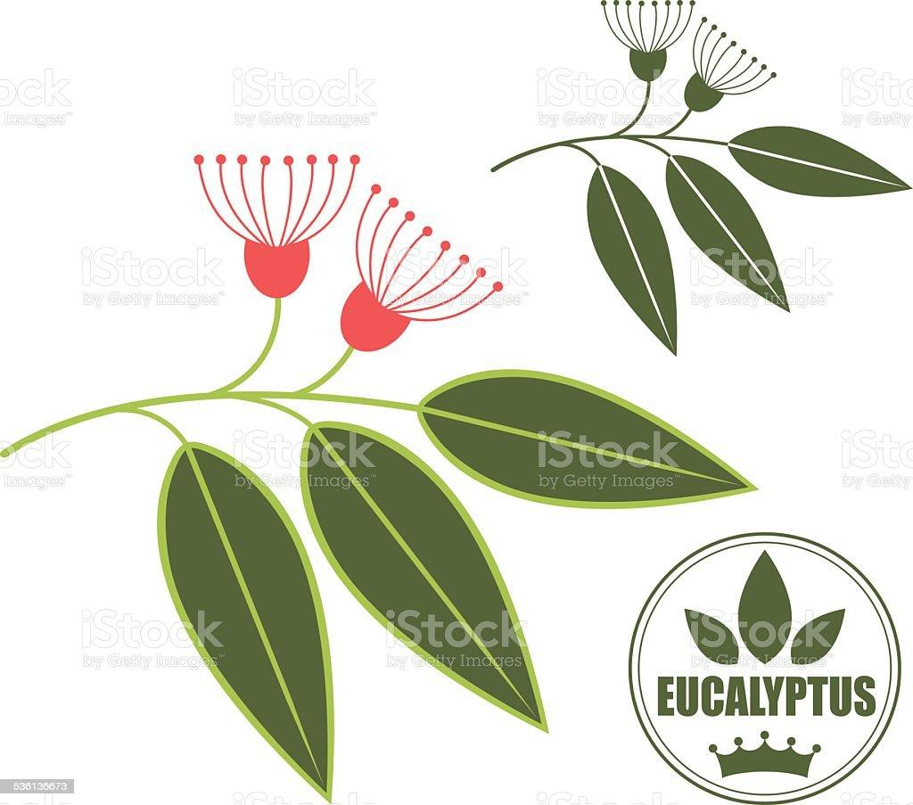 Eucalyptus vector art illustration