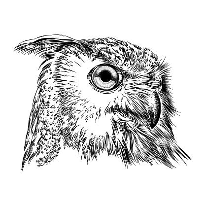 Eurasian Eagle Owl Face Ink Drawing Vector Illustration