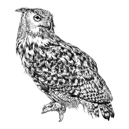 Eurasian Eagle Owl Ink Drawing Vector Illustration