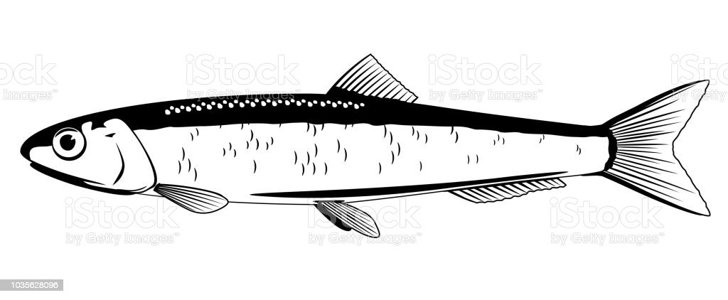 Pesca de la anchoa europea - ilustración de arte vectorial