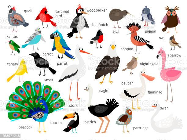 European and asian bird set vector id935971248?b=1&k=6&m=935971248&s=612x612&h=7n9n4cvgi8zj4qsza7dmo gkjsva0pvvn4csq 3wa3o=