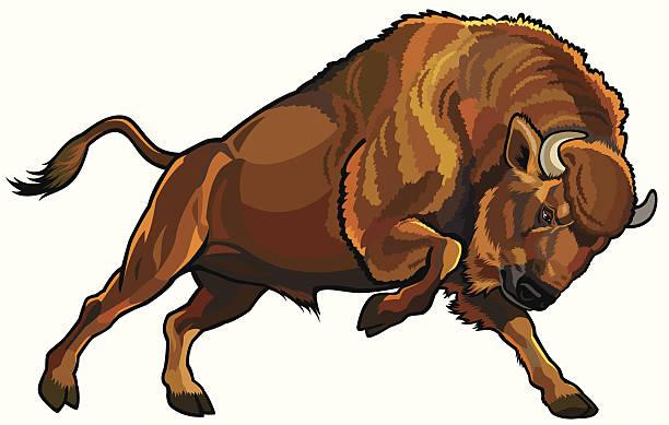 european bison vector art illustration