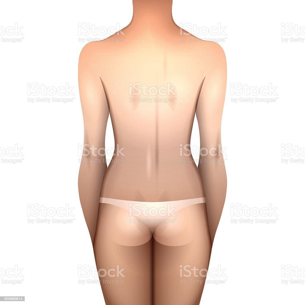 European women body - ilustração de arte em vetor