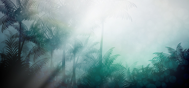 Evening in tropical rainforest jungle background