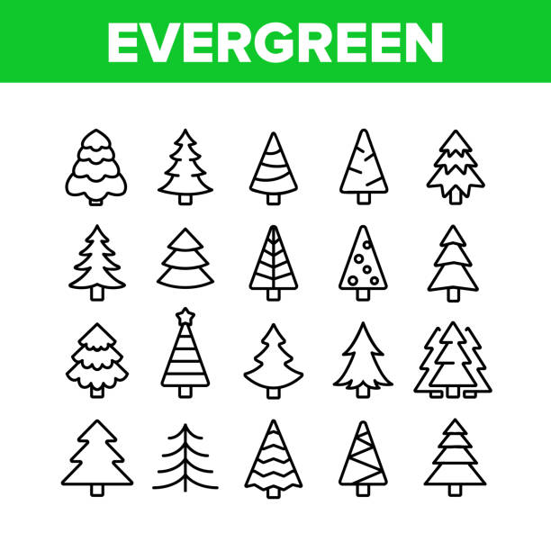 illustrations, cliparts, dessins animés et icônes de evergreen pine tree collection icônes set vector - pinacée