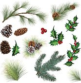 Evergreen collection. Pine, spruce and holly. Evergreen tree elements with various sized Pine cones and multiple sprigs of evergreen branches. Spruce and holly leaf with berries  Elements can be manipulated and moved. Evergreen Sprig Elements and Holly Leaf with Berries Clipart