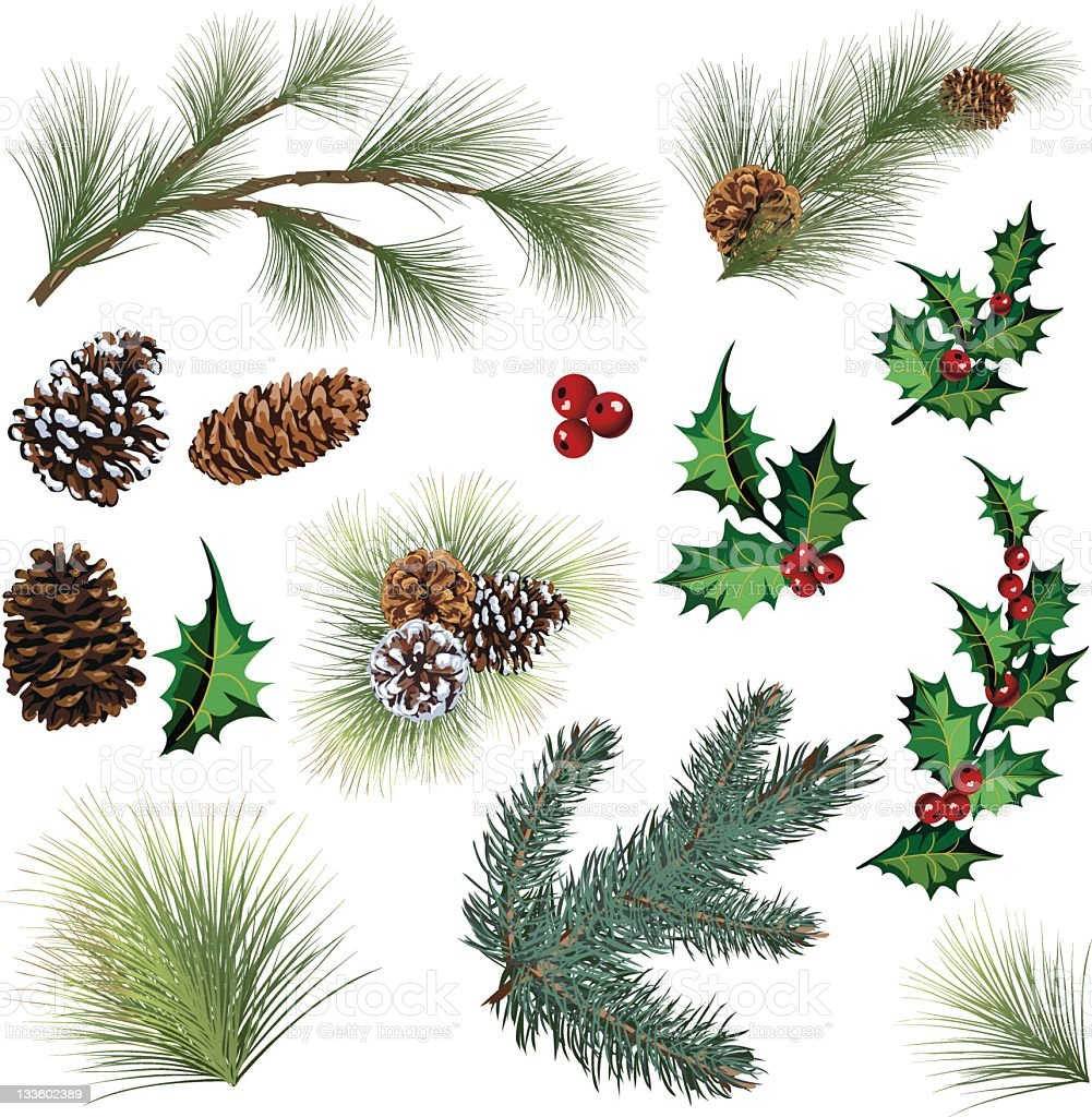 Evergreen Twig Elements and Holly Leaf with Berries Clipart vector art illustration