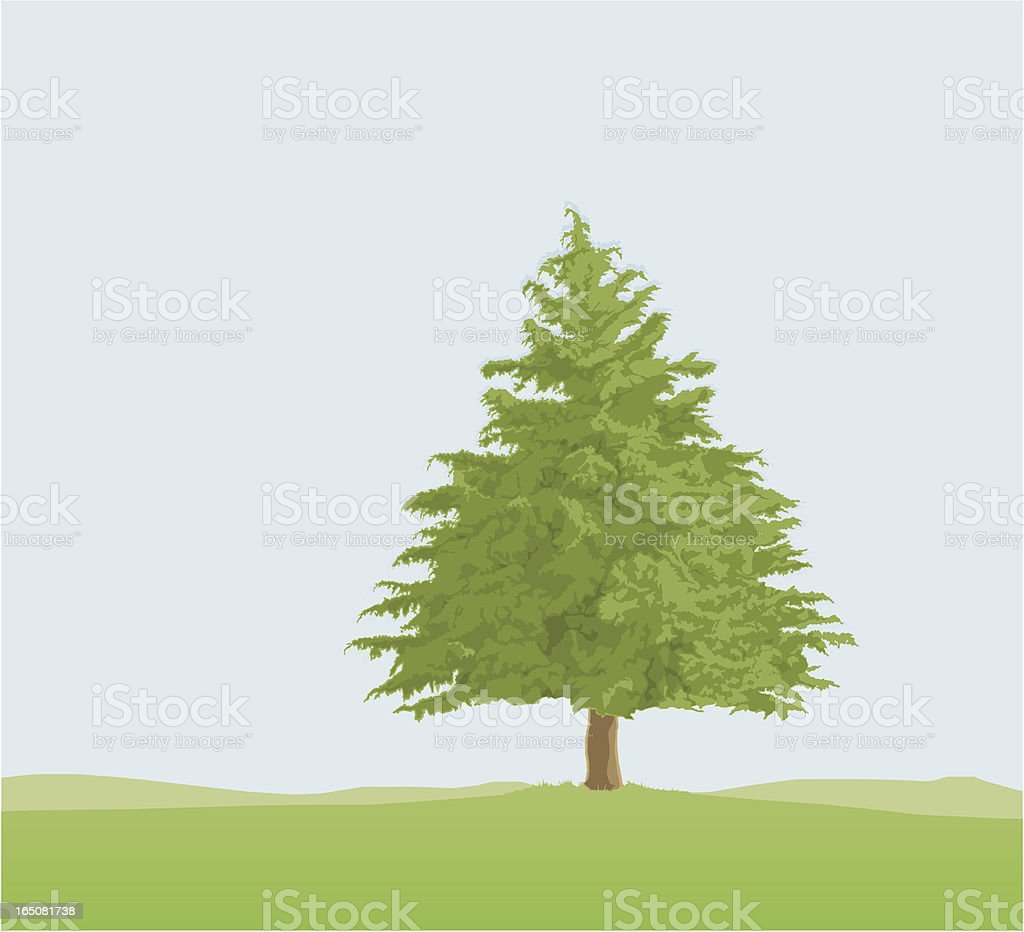 Evergreen royalty-free evergreen stock vector art & more images of beauty in nature