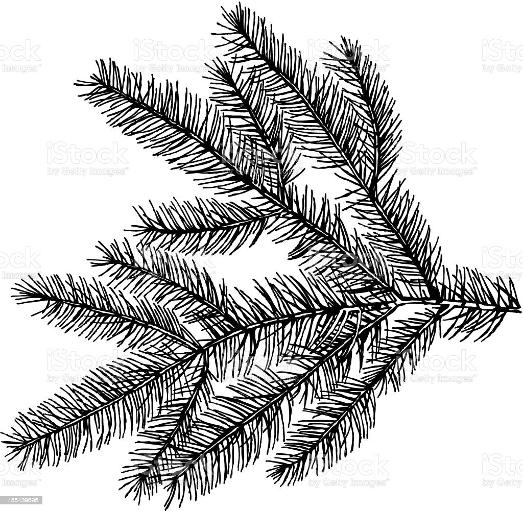 Evergreens vector art illustration