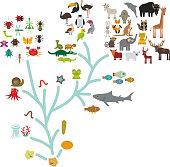 Evolution in biology, scheme evolution of animalschildren's education, science.