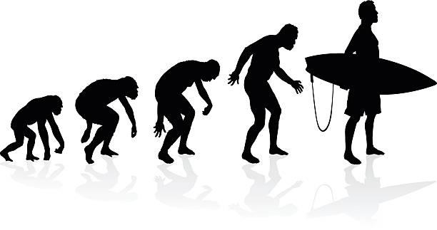 Evolution of the surfer vector art illustration