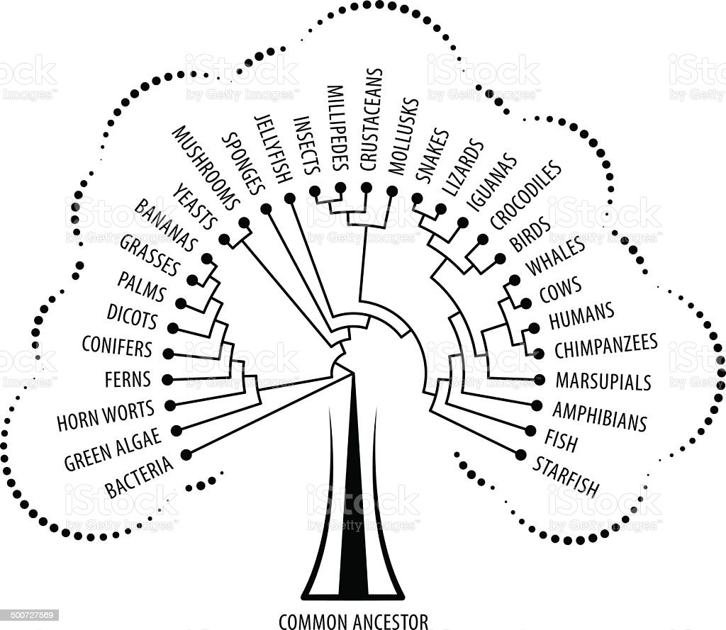 Evolution Tree royalty-free evolution tree stock vector art & more images of algae
