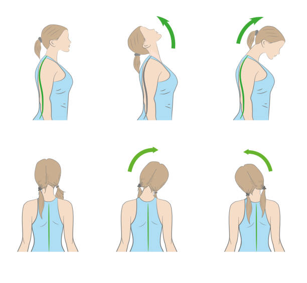 exercises for the neck and head. vector illustration exercises for the neck and head. vector illustration neck stock illustrations