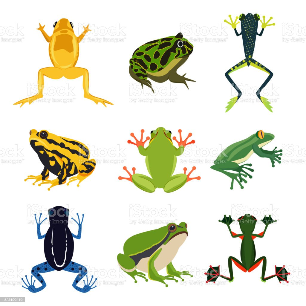 Exotic amphibian set. Different frogs in cartoon style. Green animals isolate on white vector art illustration