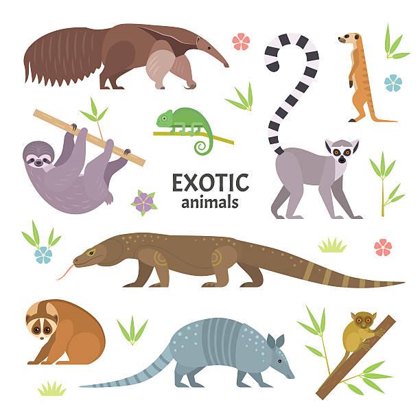 exotic animals. - chameleon stock illustrations