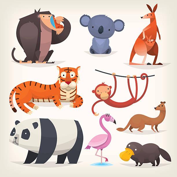 bildbanksillustrationer, clip art samt tecknat material och ikoner med exotic birds and animals - platypus