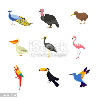 Exotic birds flat vector illustrations set. Parrot, flamingo, peacock on white background. African, Asian wild avian animals design elements. Tropical rainforest, jungle fauna isolated cliparts pack