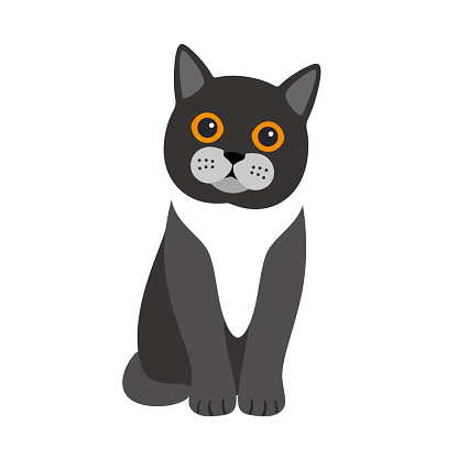Exotic cat standing, flat icon design, vector illustration