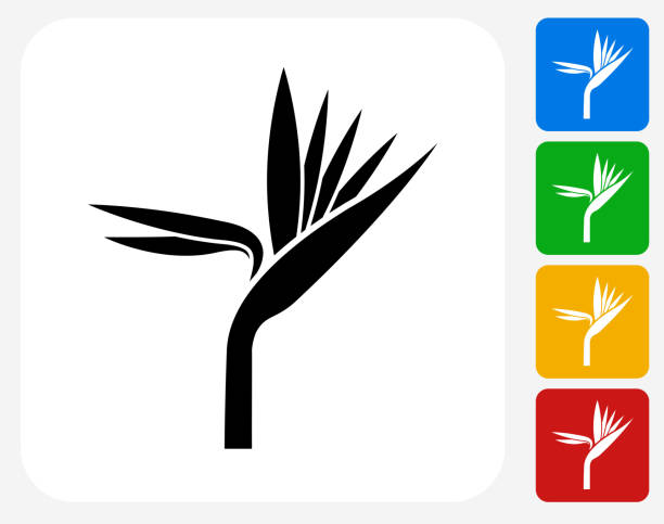 Exotic Flower Icon Flat Graphic Design Exotic Flower Icon. This 100% royalty free vector illustration features the main icon pictured in black inside a white square. The alternative color options in blue, green, yellow and red are on the right of the icon and are arranged in a vertical column. bird of paradise plant stock illustrations