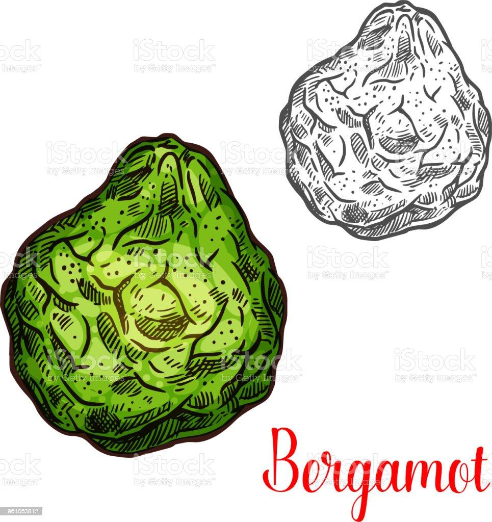 エキゾチックなフルーツ ベルガモット ベクトル アイコン - かんきつ類のロイヤリティフリーベクトルアート