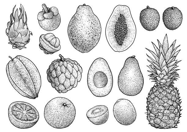exotische früchte sammlung abbildung, zeichnung, gravur, tinte, strichzeichnungen, vektor - vanillesauce stock-grafiken, -clipart, -cartoons und -symbole