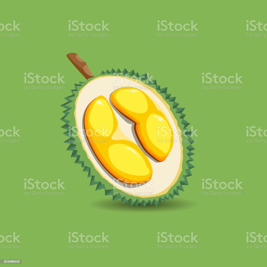 exotic fruit durian on a green background a half of fresh organic