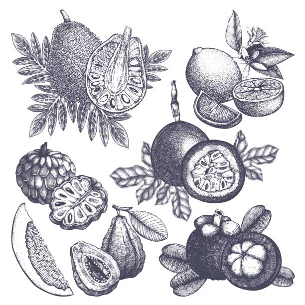 illustrazioni stock, clip art, cartoni animati e icone di tendenza di exotic fruits set - passiflora