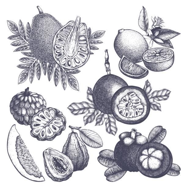 illustrations, cliparts, dessins animés et icônes de ensemble de fruits exotiques - fruit de la passion