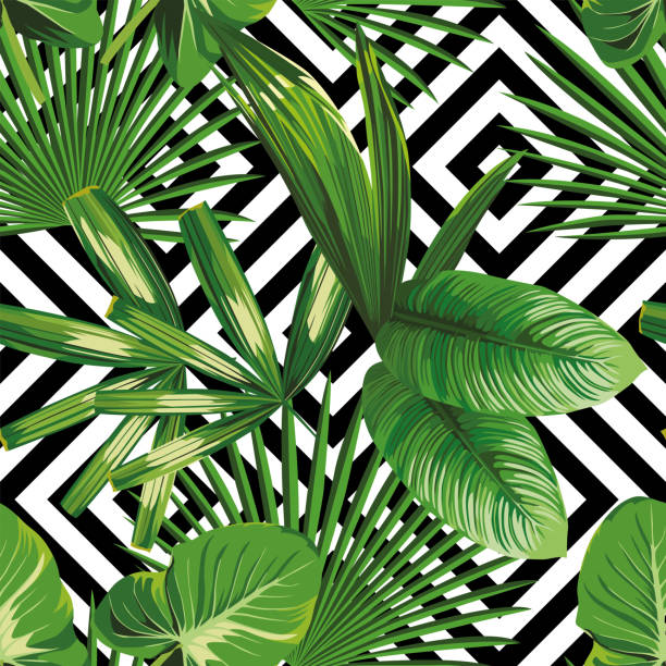 exotic jungle plant tropical palm leaves Print summer exotic jungle plant tropical palm leaves. Pattern, seamless floral vector on the black white geometric background. Nature wallpaper. banana patterns stock illustrations