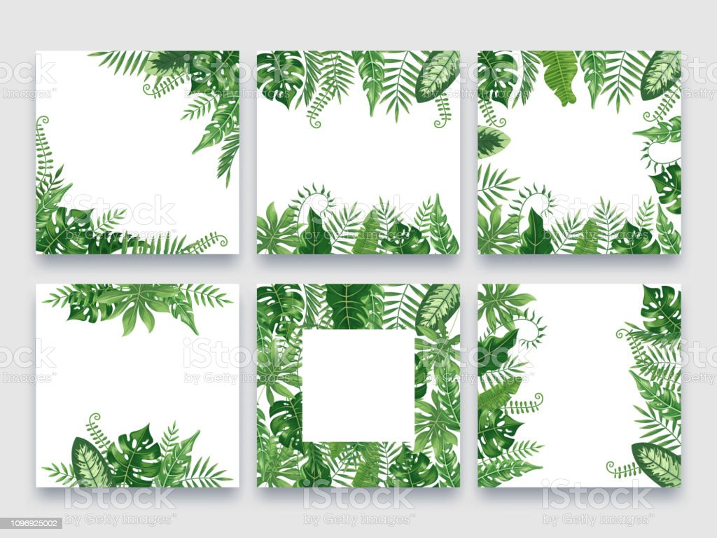 Exotic Leaves Frame Tropical Leaf Border Nature Summer Frames And Luxury Palm Leaves Borders Vector Design Background Set Stock Illustration Download Image Now Istock Modern green tropical plant leaves canvas art print poster , nordic green plant wall pictures kids room large painting no frame. exotic leaves frame tropical leaf border nature summer frames and luxury palm leaves borders vector design background set stock illustration download image now istock