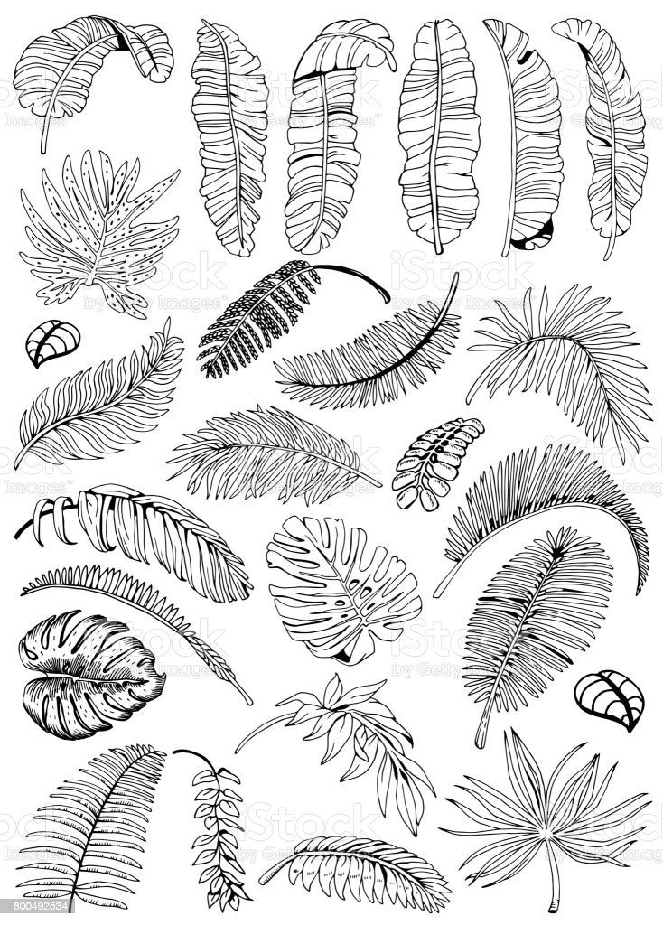 Exotic Palm Leaves Background. Tropical Leaves Big Set. Hand Drawn Black and White illustration.