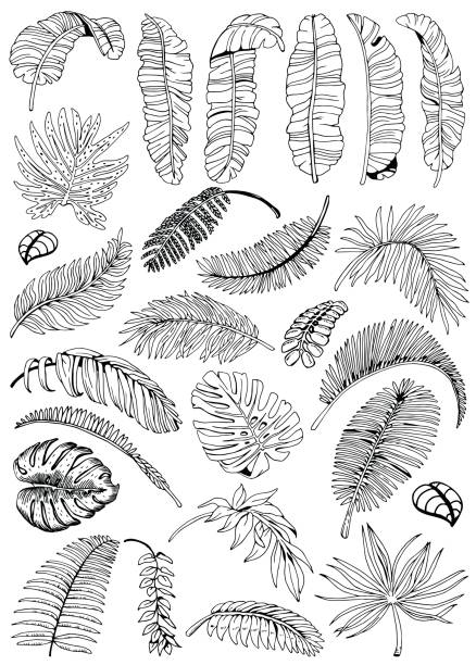 exotic palm leaves background. tropical leaves big set. hand drawn black and white illustration. - palm leaf stock illustrations, clip art, cartoons, & icons