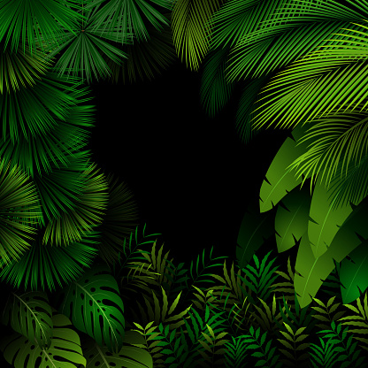 Exotic Pattern With Tropical Leaves On A Black Background Stock Illustration Download Image Now Istock Black rectangle monstera leaves frame on white background. https www istockphoto com vector exotic pattern with tropical leaves on a black background gm503506412 82558427
