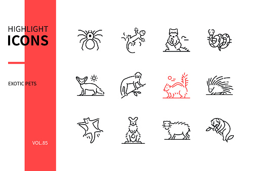 Exotic pets - modern line design style icons set