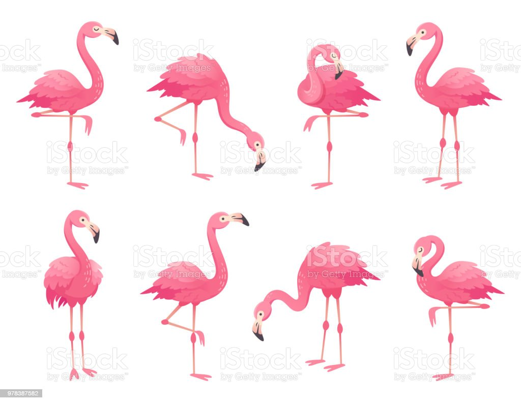 Exotic Pink Flamingos Birds Flamingo With Rose Feathers Stand On One ...
