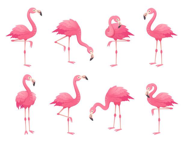 exotische rosa flamingos vögel. flamingo mit rosa federn auf einem bein stehen. rosig gefieder flam vogel cartoon-vektor-illustration - maul stock-grafiken, -clipart, -cartoons und -symbole