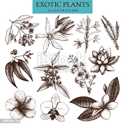 Exotic Plants Collection Vector Tropical Flowers Set Stock Art 538568290