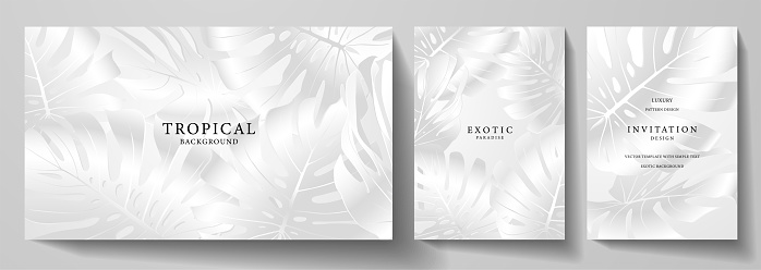 Exotic silver banner, cover design set. Floral background with white tropical pattern of leaf monstera plant