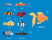 Exotic tropical aquarium fish different colors underwater ocean species aquatic nature flat vector illustration. Decorative wildlife cartoon fauna aquarium water marine life.