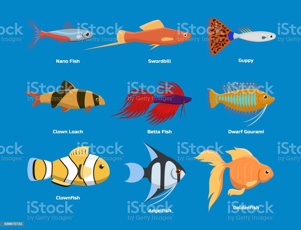 Exotische Tropische Aquarium Fische Verschiedene Farben Unterwasser ...