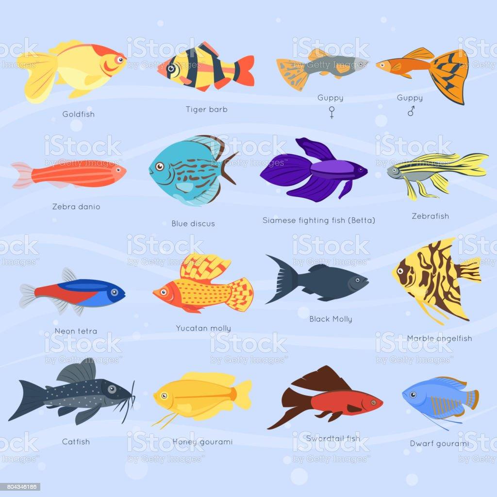 Exotische tropische fische verschiedene farben unterwasser for Fische arten