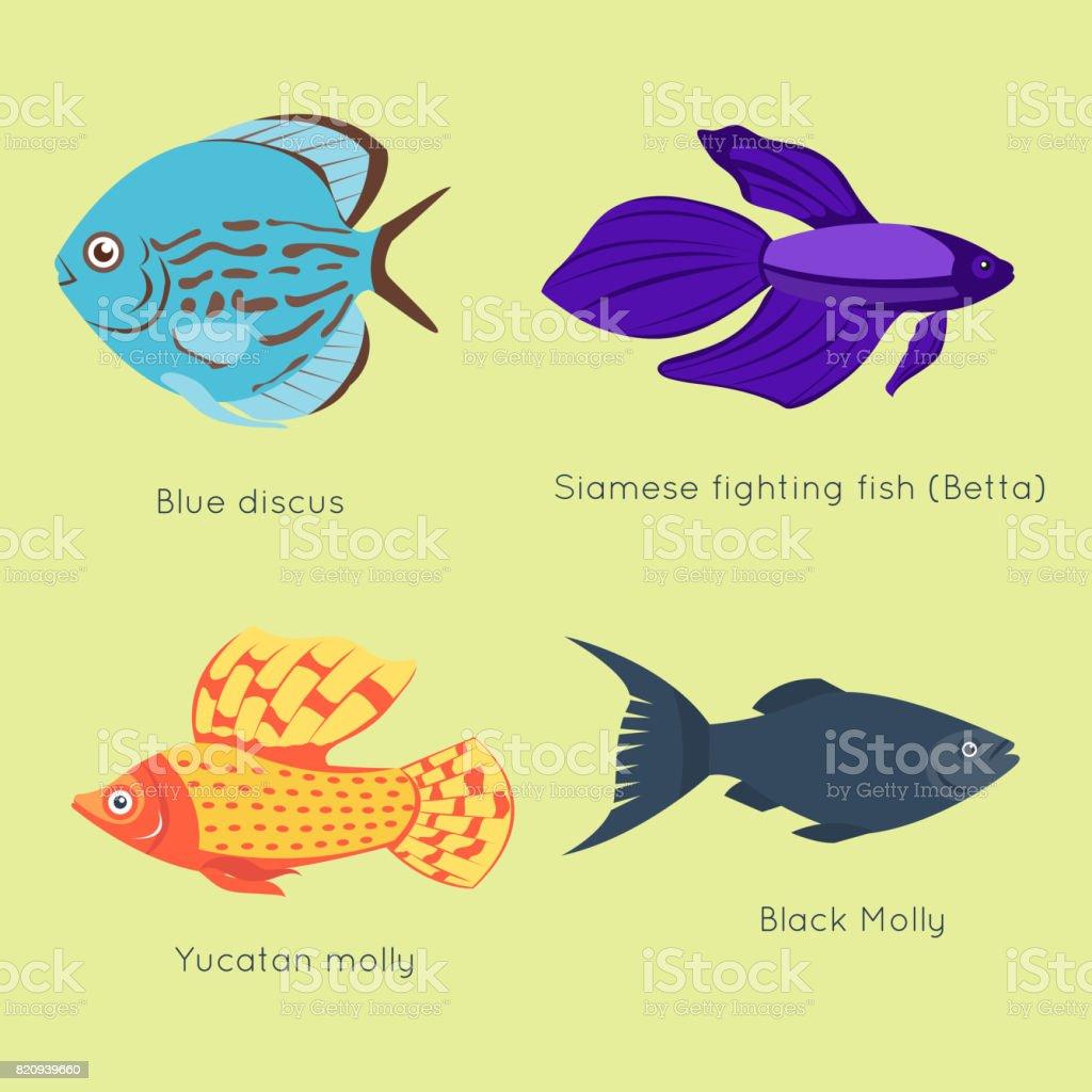 Exotische Tropische Fische Verschiedene Farben Unterwasser Ozean ...