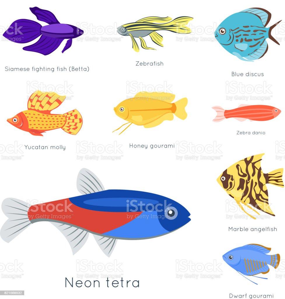 Exotic Tropical Fish Different Colors Underwater Ocean Species ...
