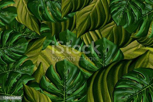istock Exotic tropical plants 1294050850