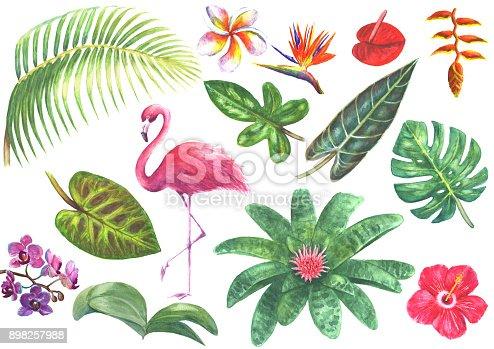 Exotic watercolor tropical set